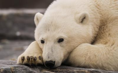see the Northern Lights and polar bears in Svalbard